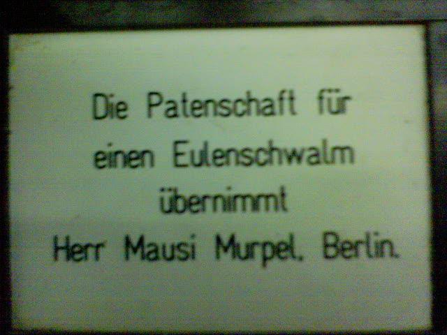 eulenschwalm